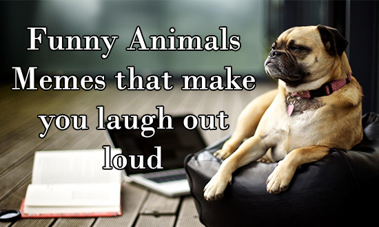 Funny animals memes that make you laugh out loud