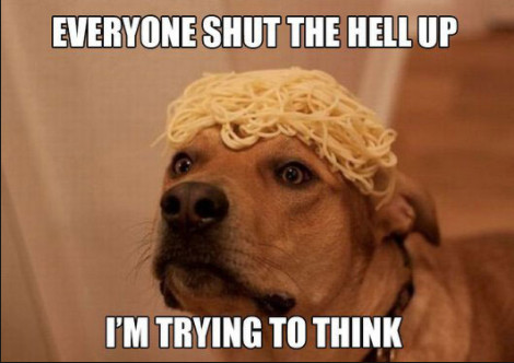 Funny Memes Clean 2018 : Funny animals memes that make you laugh out loud funny animal memes